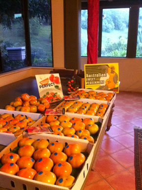 Sweet Australian Persimmons grown at Rossmount.